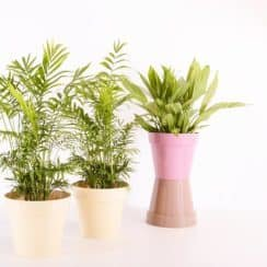 Sound Absorbing Indoor Plants